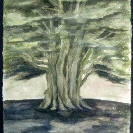 Joy Godfrey The Clevedon Cedar watercolour on handmade paper