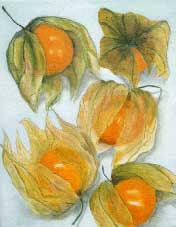 Physalides Oil on Canvas By Joy Godfrey