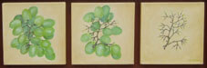 Grapes (triptych) Oil on Canvas By Joy Godfrey